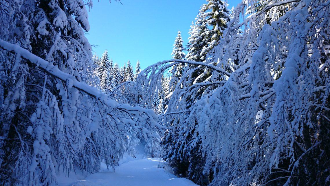 В отпуск – зимой или летом?