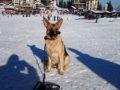 Пампорово – удивительный край гор Родопи